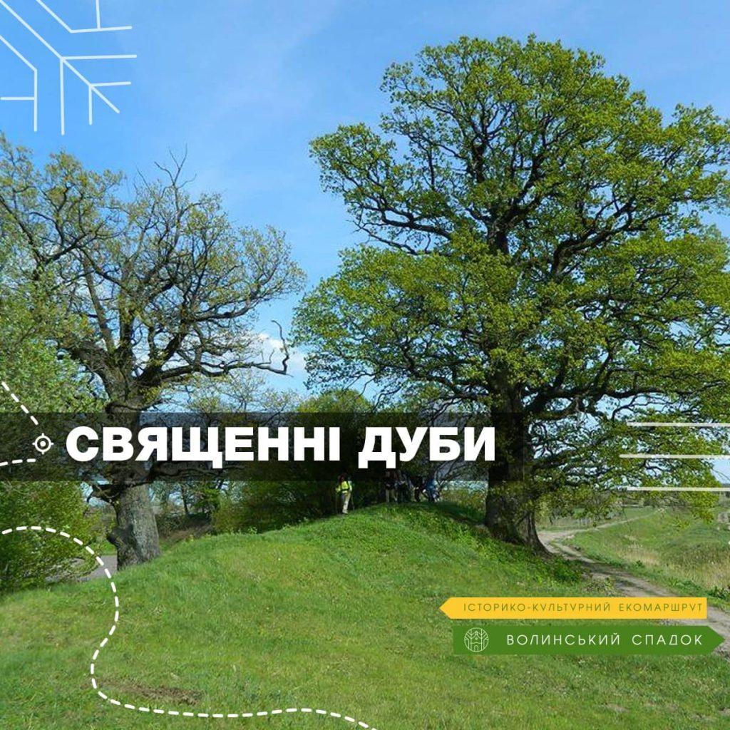 «Волинський спадок» поведе туристів до дубів-велетнів